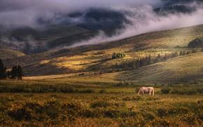 Картинка поле, цветы, горы, природа, конь, холмы, лошадь, пастбище, луг, пасется