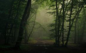 Картинка дорога, лес, ветки, туман, листва
