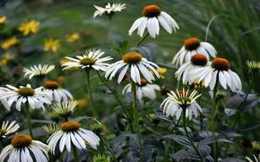 Картинка лето, цветы, размытие, сад, клумба, боке, рудбекия, эхинацея