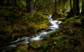 Картинка лес, ручей, Швейцария, Switzerland, Бернский Оберланд, Bernese Oberland, Ручей Бюельбах, Büelbach