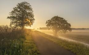 Картинка Holland, Sunrise, Early Mornings, Alblasserwaard, Kooiwijk