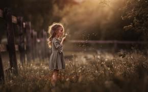 Картинка лето, трава, природа, забор, вечер, девочка, одуванчики, ребёнок, Марина Петра