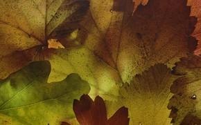 Картинка листья, макро, текстура, формы, Martin Dollenkamp