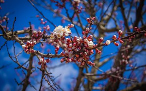 Картинка Дерево, Весна, Цветок, Растение, Ветка, Ветки, Flower, Flowers, Flora, Plants, Close-up, Blooming, Bloom, Флора, Plant, …