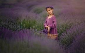 Картинка поле, цветы, девочка, корзинка, венок, лаванда, лавандовое поле