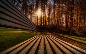 Картинка осень, лес, солнце, лучи, свет, деревья, скамейка, парк, поляна, доски, лавочка, ракурс, золотая осень
