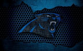 Картинка wallpaper, sport, logo, NFL, american football, Carolina Panthers