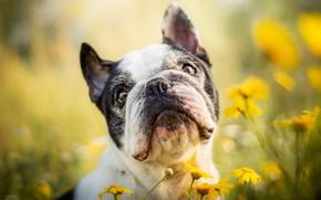 Картинка лето, друг, собака