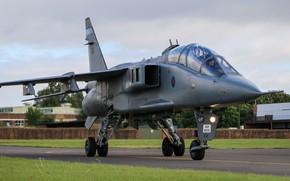 Картинка Jaguar, Истребитель-бомбардировщик, RAF, Sepecat Jaguar, Sepecat Jaguar T4