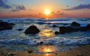 Картинка Израиль, побережье, море, птицы, небо, закат