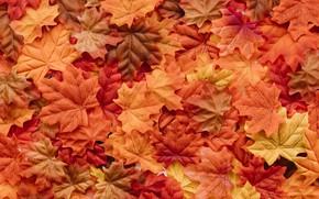 Обои осень, листья, фон, colorful, background, autumn, leaves, осенние, maple