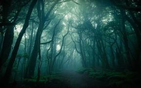 Картинка лес, деревья, туман, тропинка