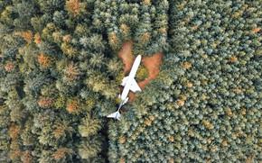 Картинка лес, деревья, вид, самолёт, OREGON STATE