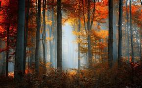 Обои желтые листья, осенний лес, утренний туман