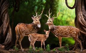 Картинка животные, деревья, природа, стволы, семья, арт, олени, оленёнок