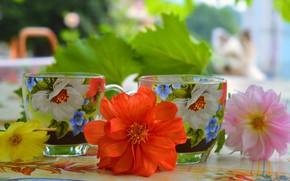 Картинка Цветы, Чашки, Flowers