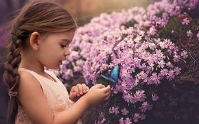 Картинка Desktop, Light, Orange, Blue, Little, Cute, Dress, Butterfly, Catch, Wearing, Trying