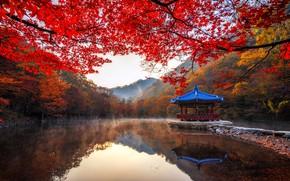 Картинка осень, деревья, пейзаж, горы, ветки, природа, туман, пруд, парк, беседка, Южная Корея, павильон, Naejangsan