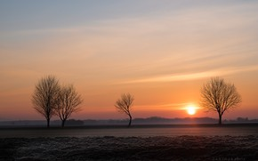 Картинка солнце, деревья, природа, Лес, Zan Foar