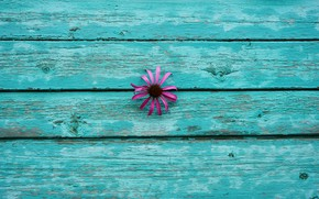 Картинка цветок, цветы, фон, стена, обои, доски, минимализм, минимум, эхинацея
