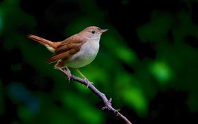 Картинка птица, ветка, птаха