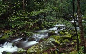 Картинка лес, река, камни, США, штат Теннесси, Национальный парк Грэйт Смоки Маунтинс