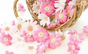 Картинка цветы, корзина, Хризантемы