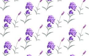 Картинка белый, цветы, фон, текстура, background, pattern, лаванда, Lavender