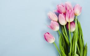 Картинка цветы, тюльпаны, розовые, pink, flowers, tulips, spring