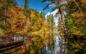 Картинка осень, лес, деревья, отражение, река, Канада, дамба, Онтарио, Canada, Ontario, Sault Ste. Marie, Thayer Dam, …