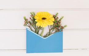 Картинка цветы, желтая, конверт, гербера, композиция