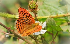 Картинка листья, фон, бабочка