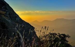 Картинка горы, восход, растения, склон