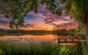 Обои лето, закат, озеро, дерево, птица, лебедь