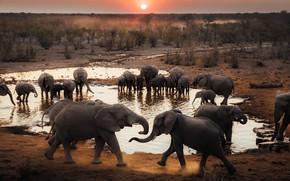 Картинка слон, стая, слоны, много