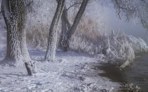Картинка зима, иней, снег, деревья, пейзаж, природа, река, берег
