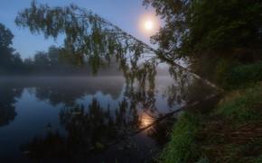Картинка солнце, река, утро, береза