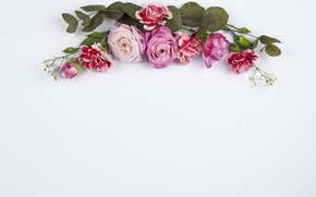 Картинка белый, цветы, фон, розы, красные, розовые, бутоны, композиция, гвоздики
