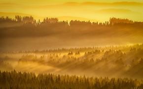 Картинка лес, свет, туман, утро