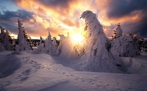Картинка зима, солнце, лучи, снег, деревья, пейзаж, следы, тучи, природа, ели