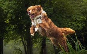 Обои друг, прыжок, собака