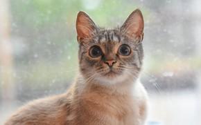 Картинка глаза, кот, милый