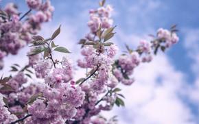 Картинка небо, цветы, весна, цветение, sky, flowers, spring, bloom