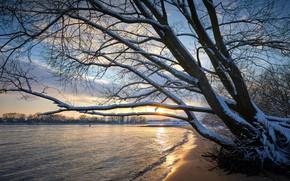 Картинка зима, снег, ветки, дерево, берег, водоем