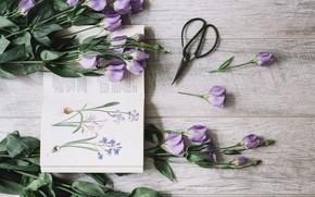 Картинка букет, книга, flower, декор, purple, book, Leaves, Decoration, Blossom, Эустома