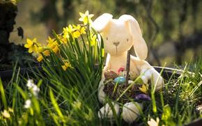 Картинка трава, свет, праздник, игрушка, яйца, весна, Пасха, боке, крашеные, пасхальный кролик