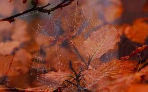 Картинка осень, природа, паутина