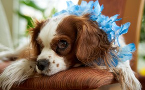 Картинка цветы, собачка, Volker Glаtsch