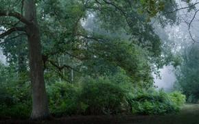 Картинка лес, лето, природа
