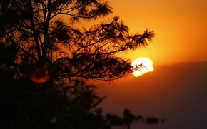 Картинка солнце, закат, горы, дерево